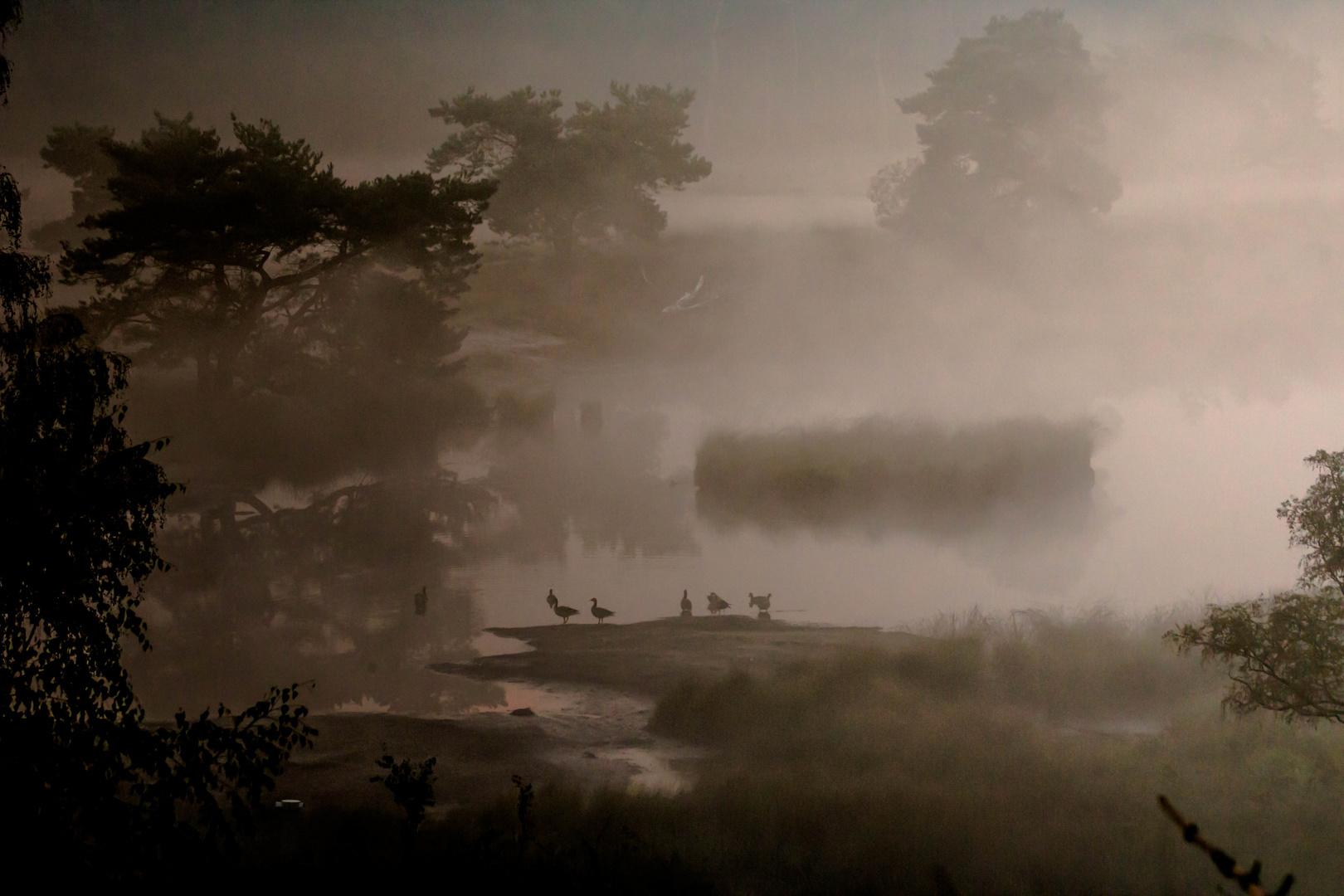 Nebel in dem niederlaendischen Nationalpark Maasduinen