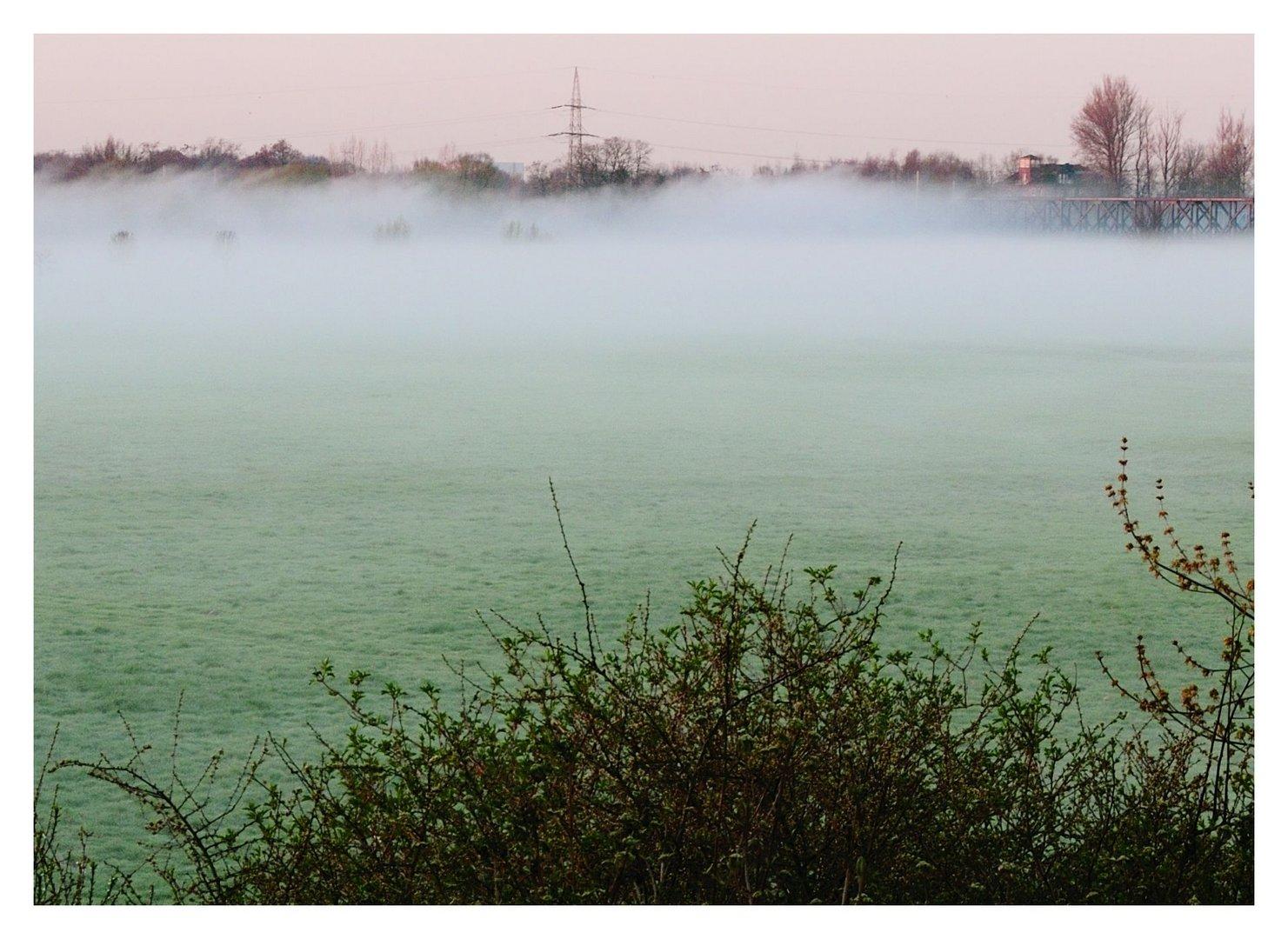 Nebel in der Aue