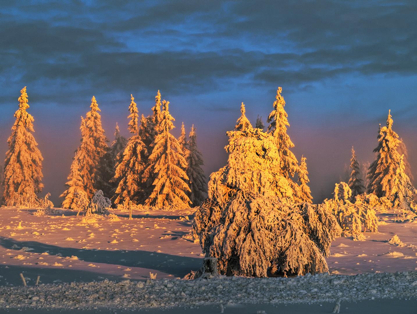 Nebel in der Morgensonne