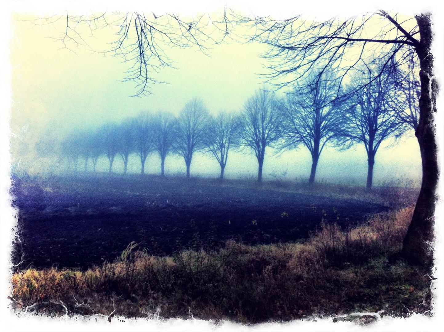 Nebel in Ostfriesland