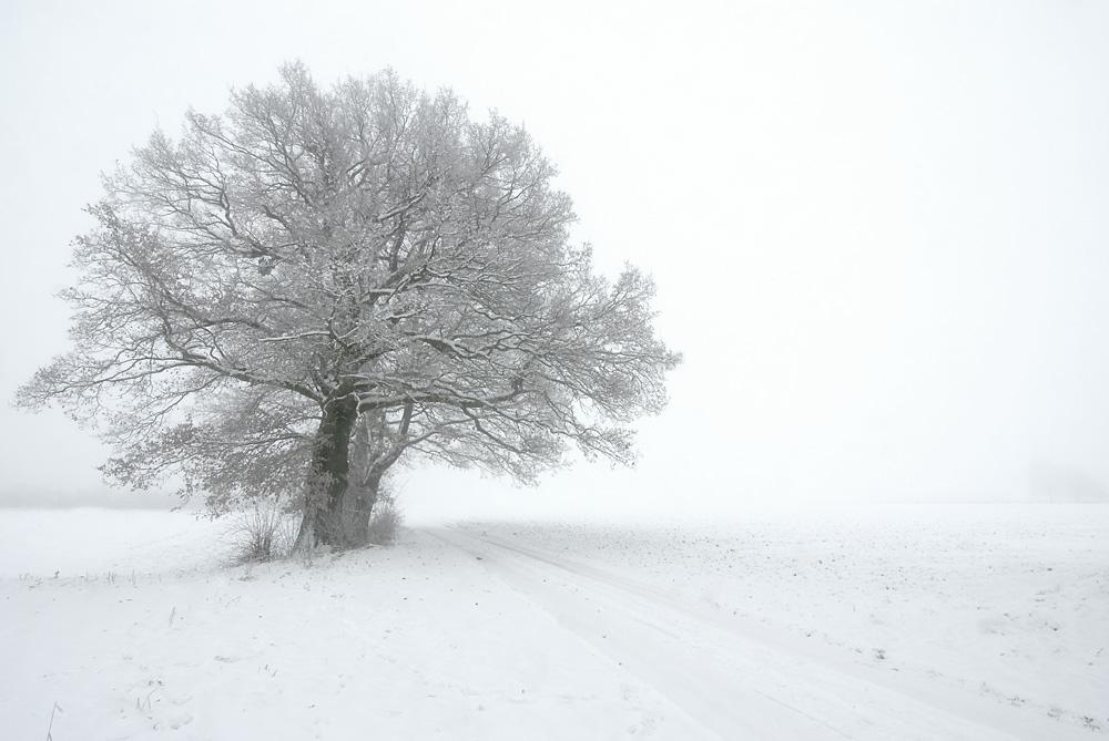 Nebel in Pfalzdorf