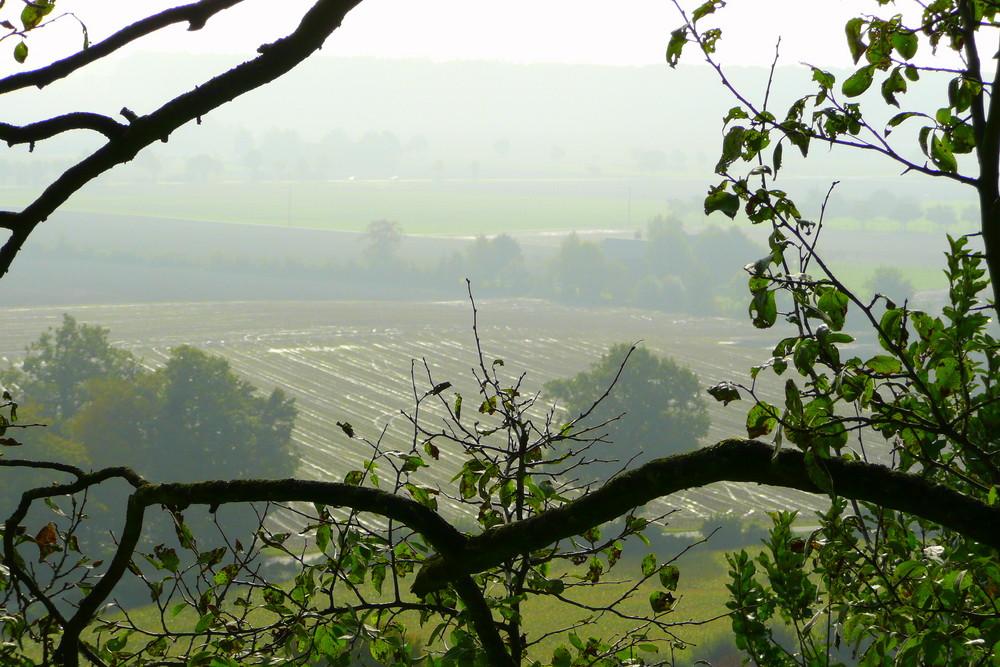 Nebel in Stromberg