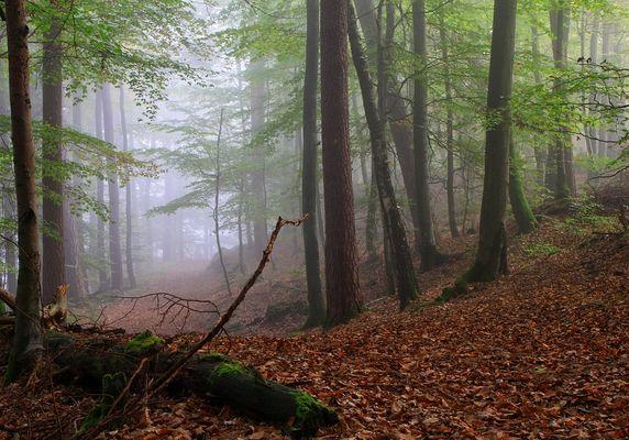 Nebel ist....