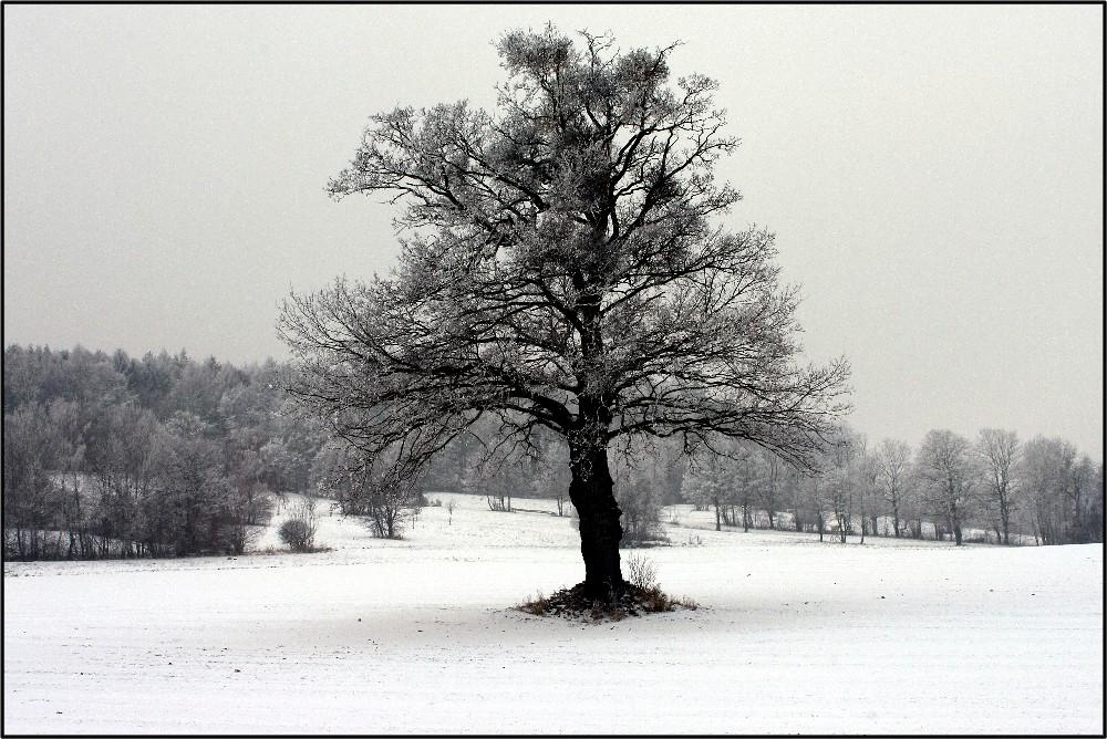 Nebel Kälte Frost_2