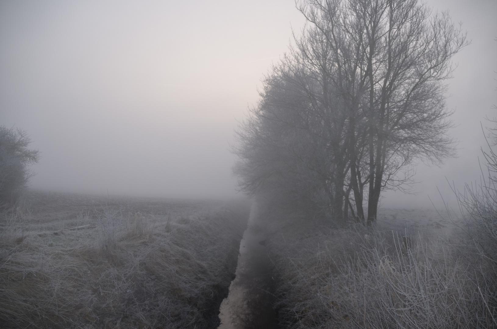 Nebel kommt auf