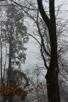 Nebel kriecht durch den Wald...