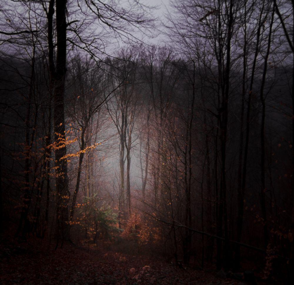 Nebel-Licht-Schatten und Schneefall