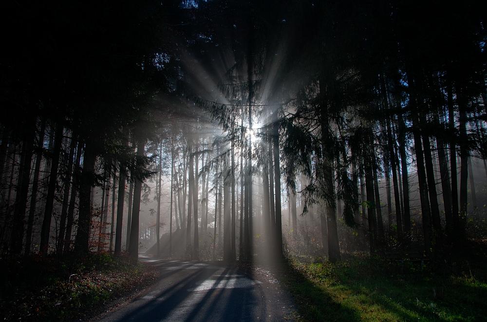 Nebel lichtet sich im Wald