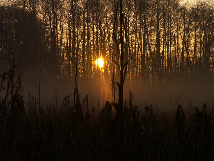 nebel maisfeld wald sonnenaufgang