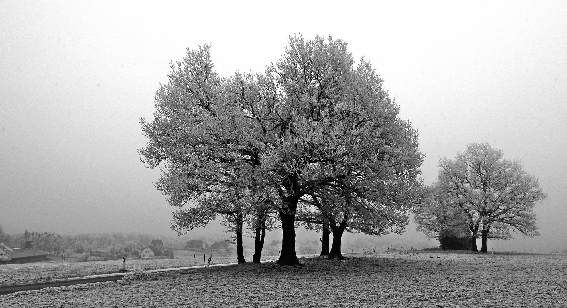 Nebel, minus 5, Rauhreif ...