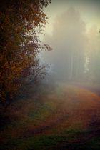 nebel mit sichtweiten teilweise unter 50 metern