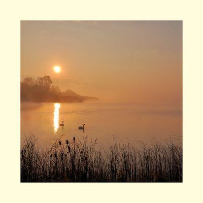 Nebel - Morgen....