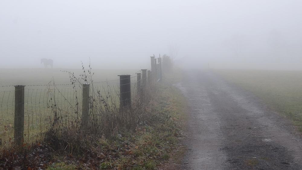 Nebel - Morgen