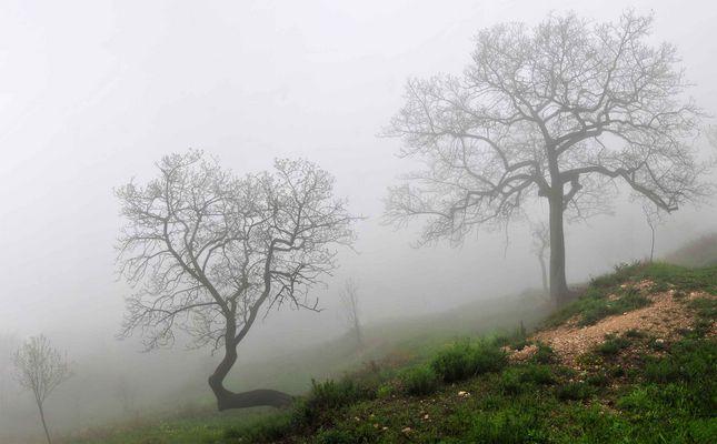 nebel olivenbäume gardasee