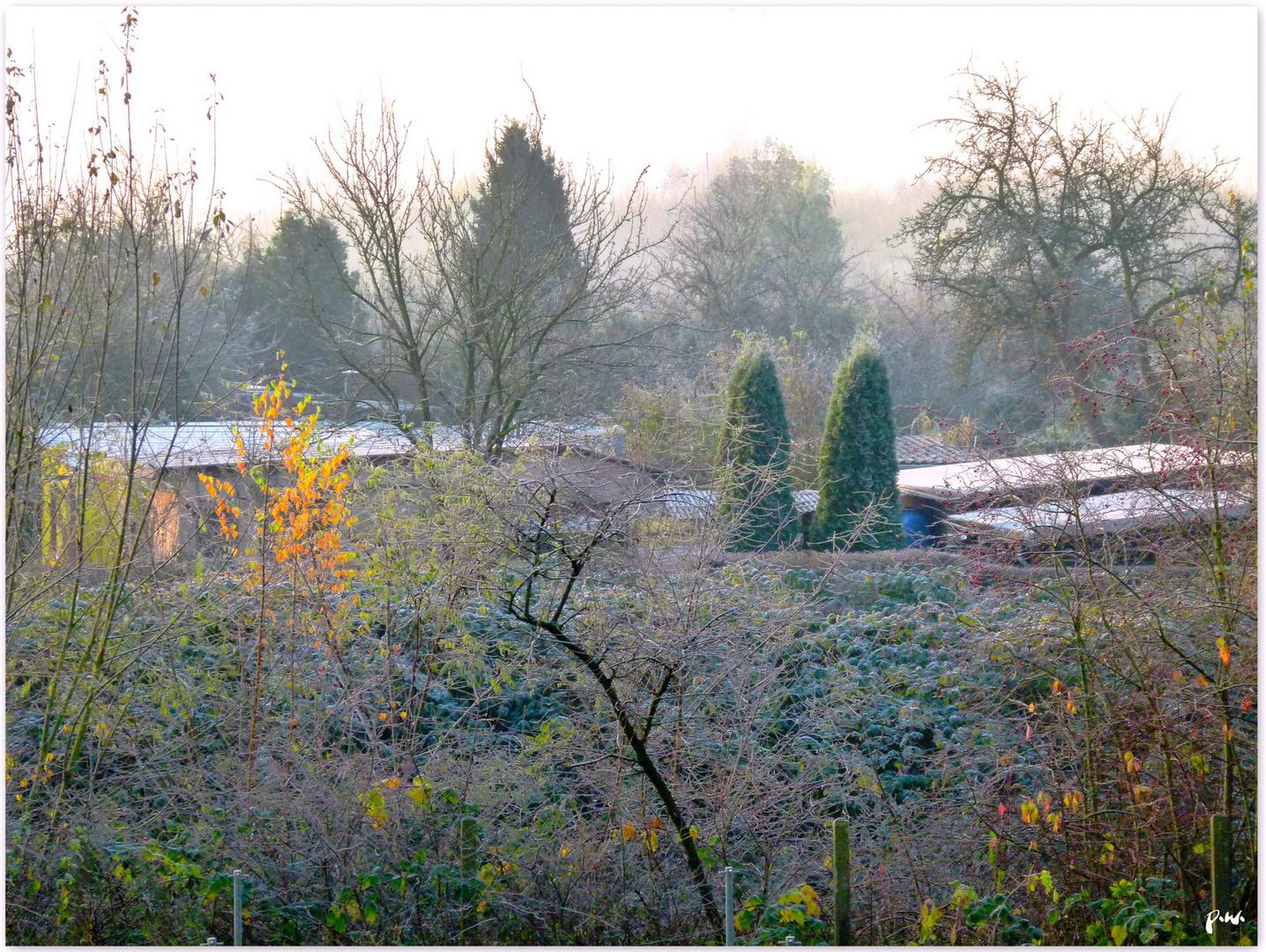 Nebel, Raureif und ein bißchen Sonne
