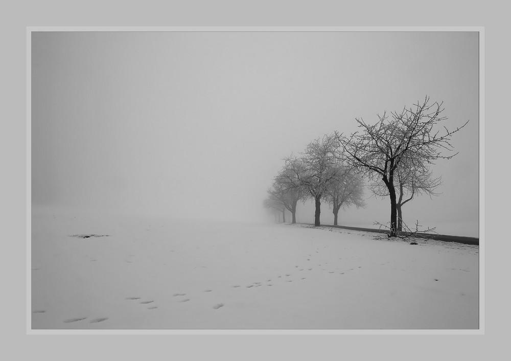 Nebel - Sonntag