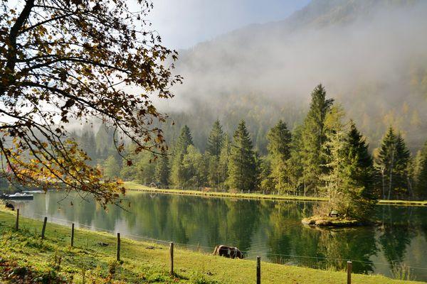 Nebel steigen über dem Teich.