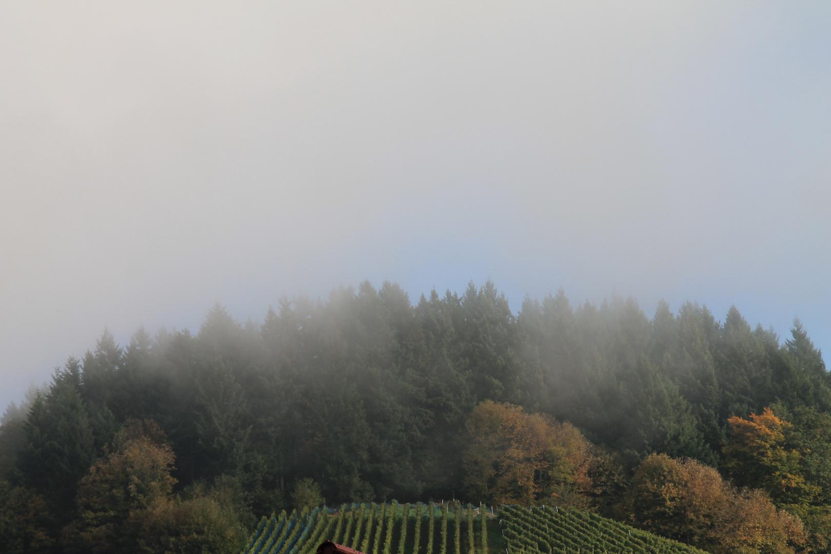 Nebel über dem Rebberg