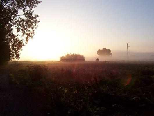 Nebel über den Feldern II