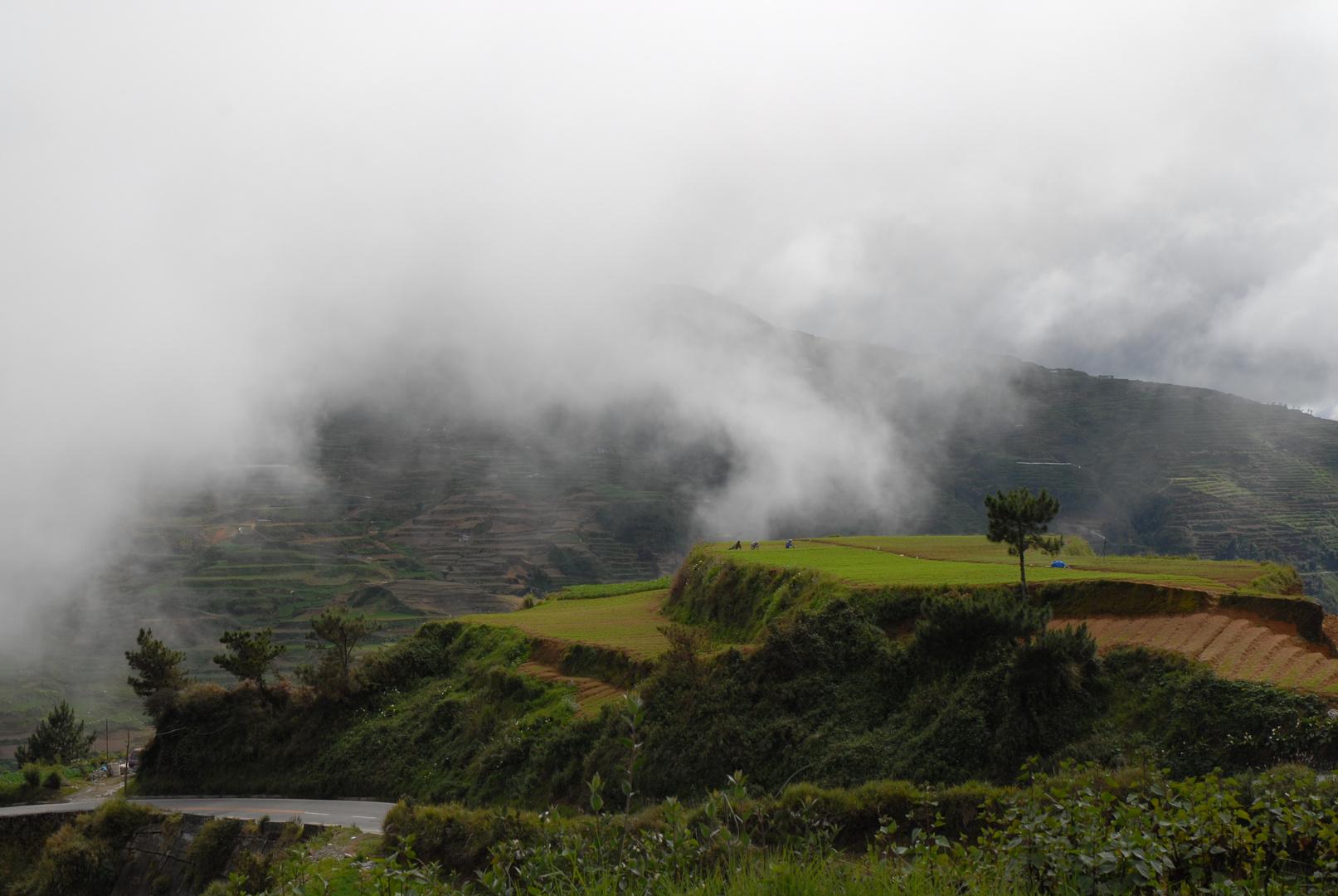 Nebel über den Reisterrassen