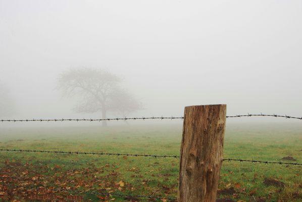 Nebel über der Koppel