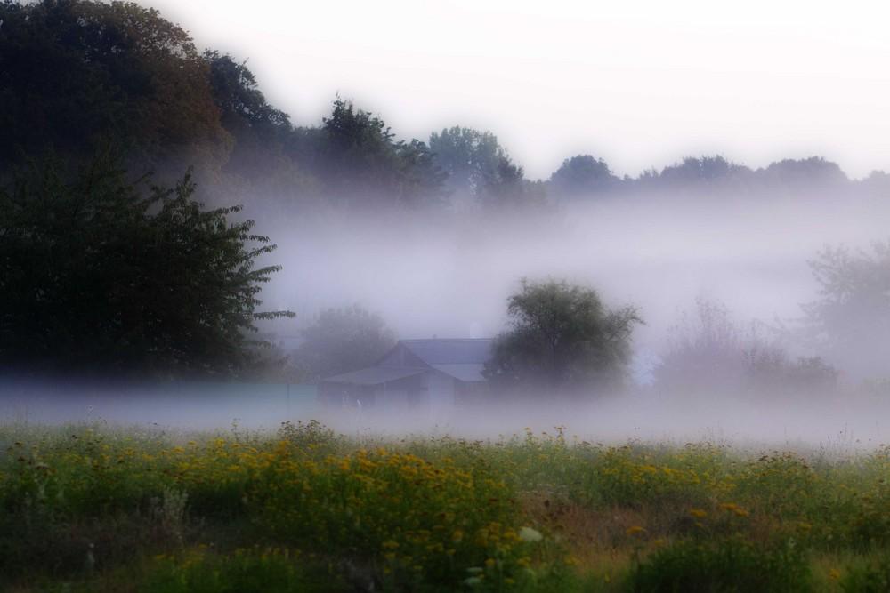 Nebel über der Wuhle