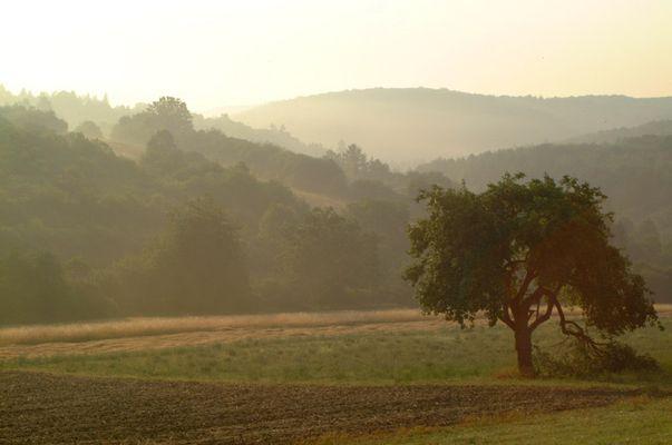 Nebel über Franken im August (3)