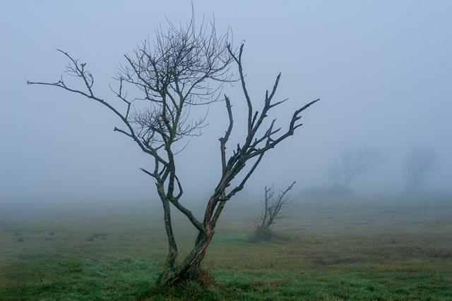 Nebel über Schillig