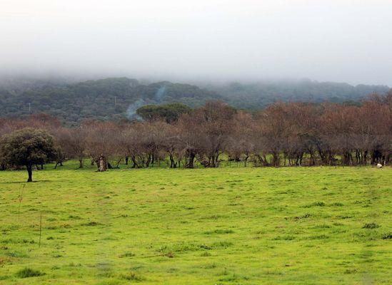 Nebel und Grün 2