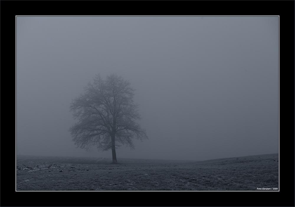 Nebel und Minus 12 Grad