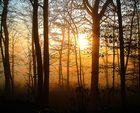 Nebel vs. Sonne