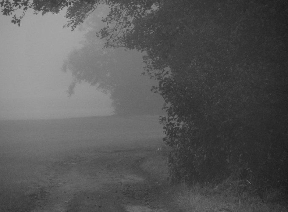 Nebel . Weg ...