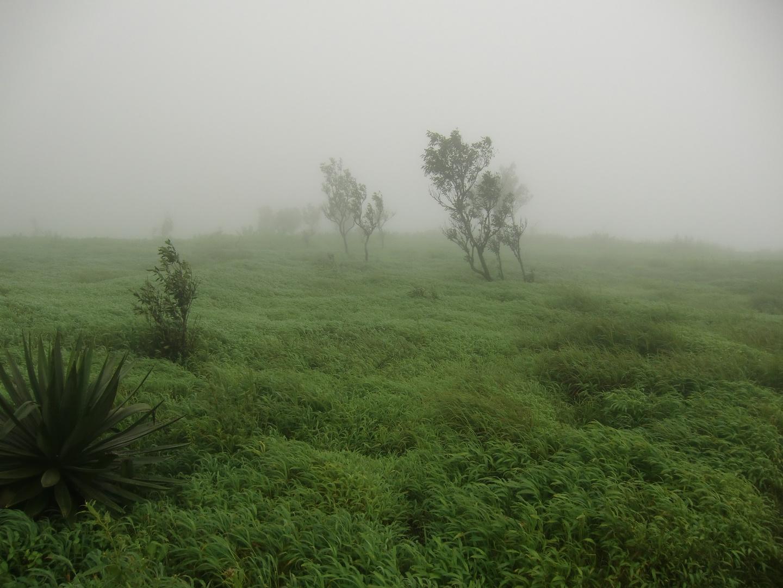 Nebel & Wind