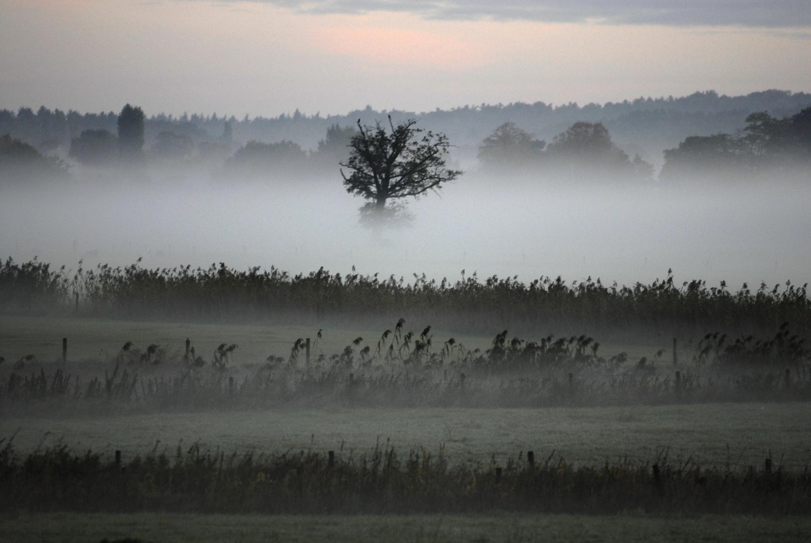Nebelbäume 2