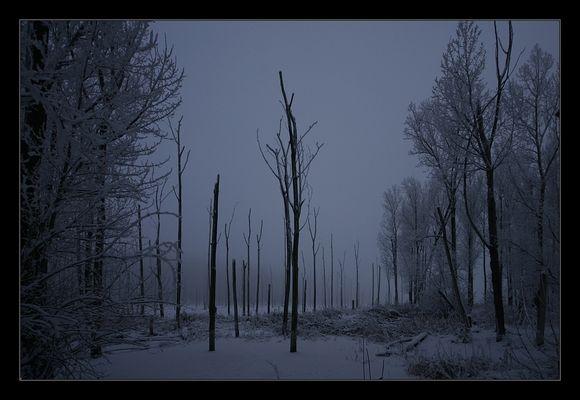 Nebelbäume (5)