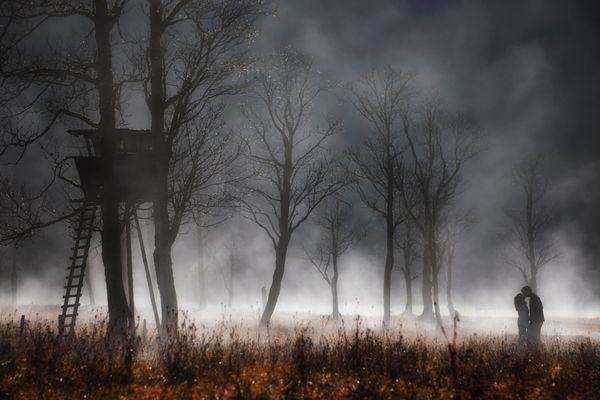 Nebelbäume III