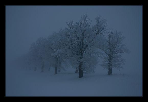Nebelbäume(7)