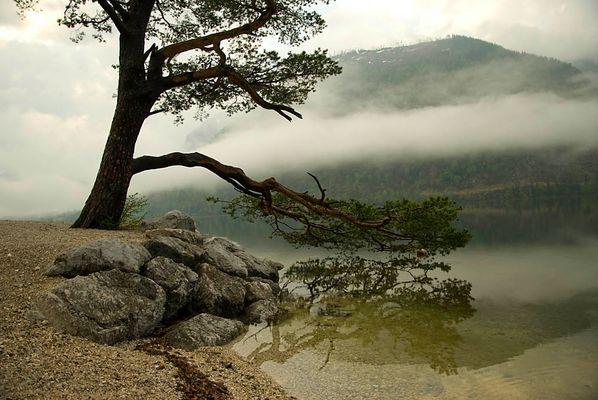 Nebelbaum am Grundlsee (Österreich)