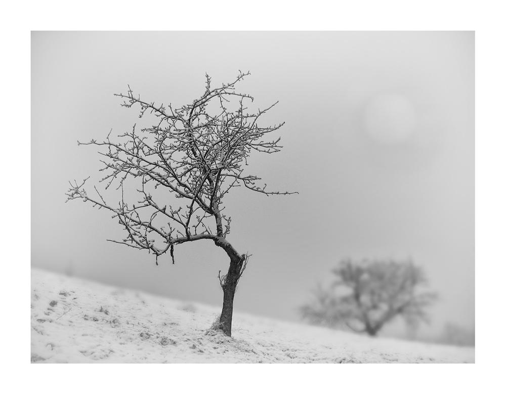 Nebelbaum