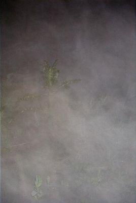 Nebeldistel