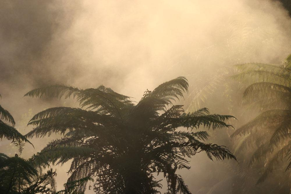 Nebelfarn in Waikite Valley