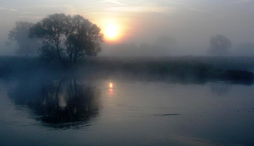 Nebelflor