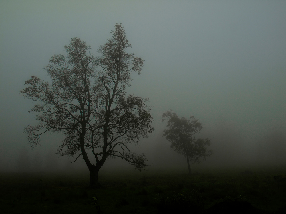 Nebelgestalten