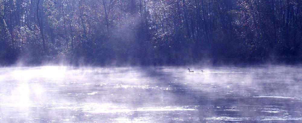 Nebelglanz