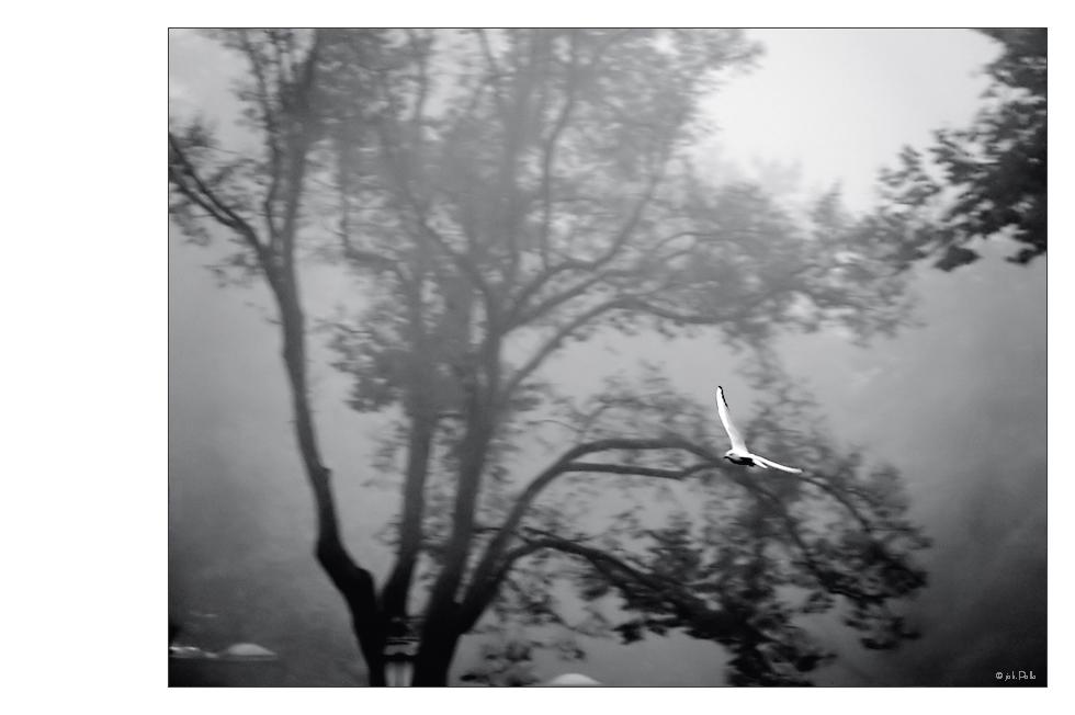 Nebelgleiter