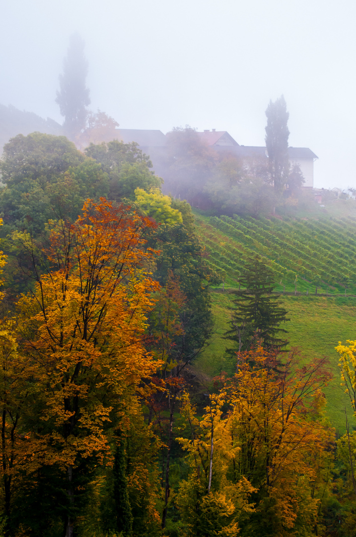 Nebelherbst im steirischen Weinland
