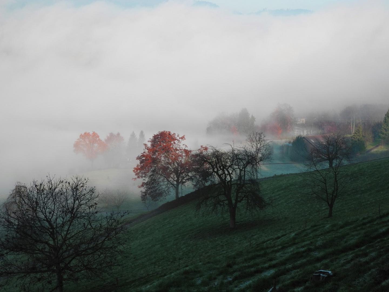 Nebelhochzeitsschleier