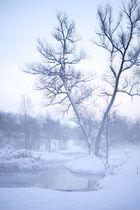 nebelige kälte