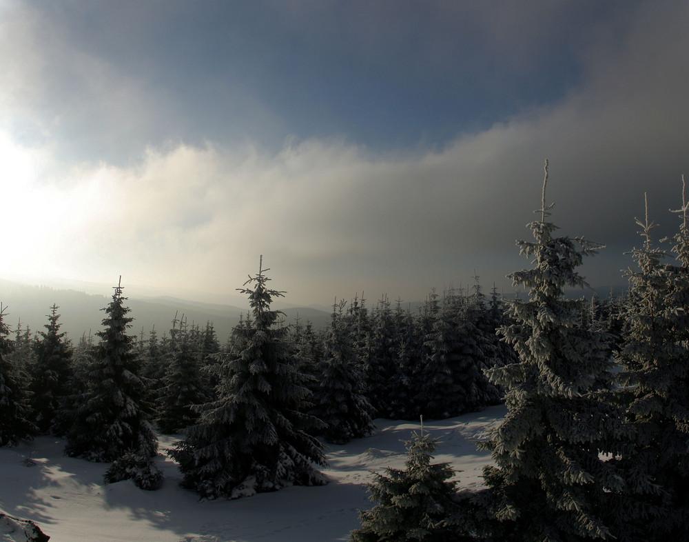 nebeliger Wintertag 2006; Sonne suchen
