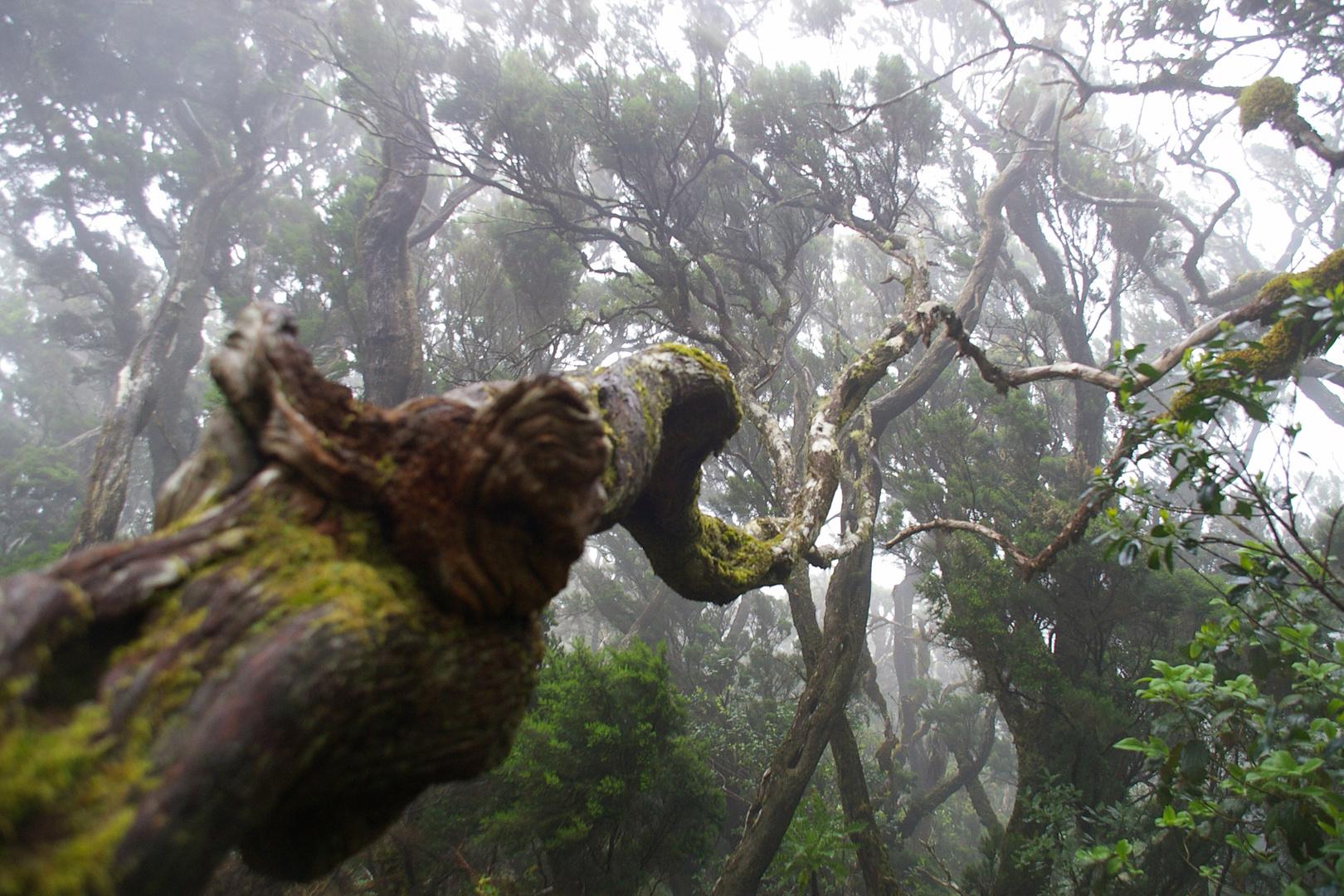 Nebel(im)Wald
